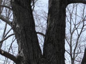 Connecticut Arborists