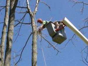 Connecticut Arborists