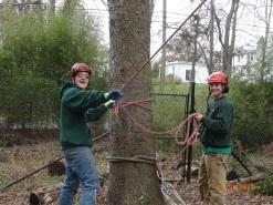 Tree Work (2)